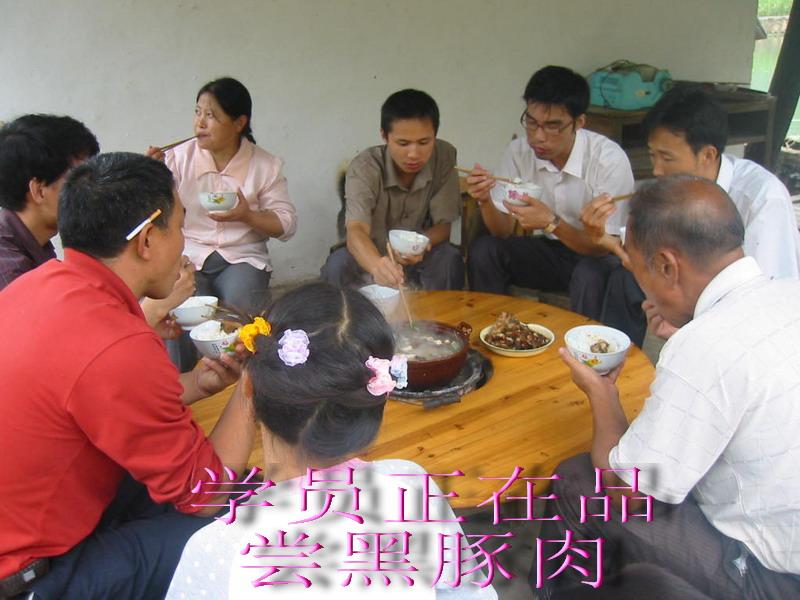 广西:绿色草食动物——黑豚 特种养殖