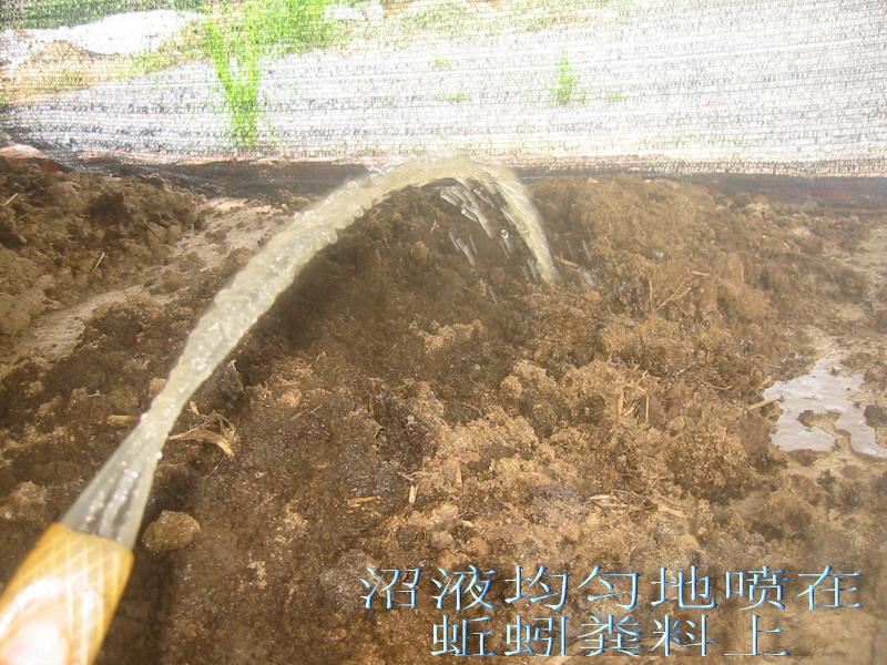 蚯蚓养殖步骤流程图