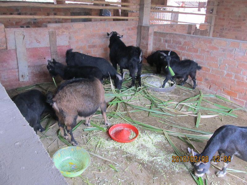 双层养羊场羊圈设计图展示